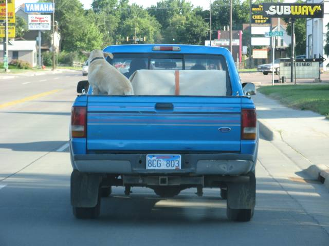 Dog in bed of moron's truck