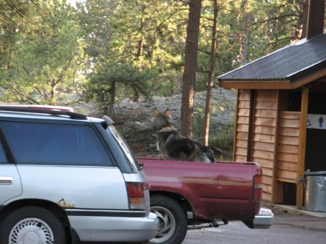 Black Hills National Forest dog
