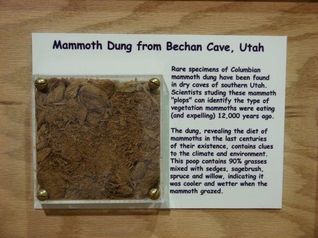 Mammoth poop