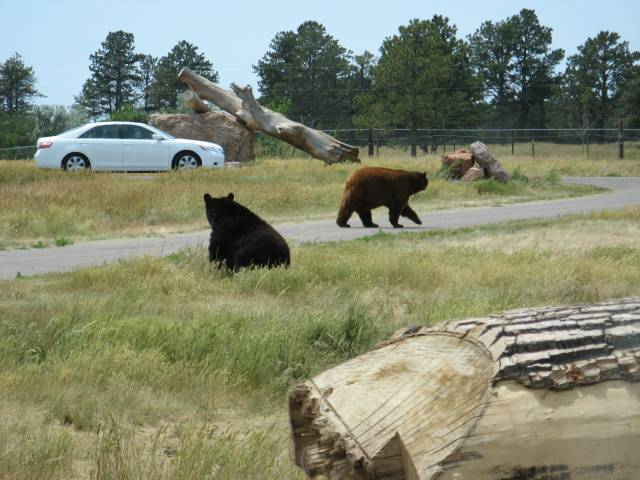 2 bears ahead!