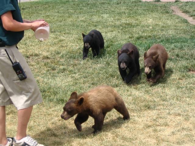 4 little bear cubs