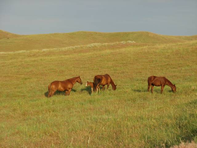 Horses at Little Bighorn Battlefield